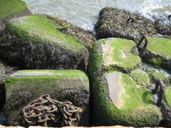 Gov Isl - harbor rocks